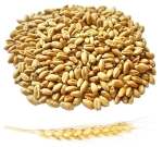Пшеница органическая (для проращивания) на развес, 100 грамм
