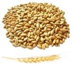 Пшеница органическая (для проращивания) на развес, 100грамм