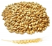 Пшеница органическая (для проращивания) на развес, 100грамм Organic&Natural фото №1