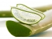 Aloe Barbadensis Листы Алоэ  фото №1